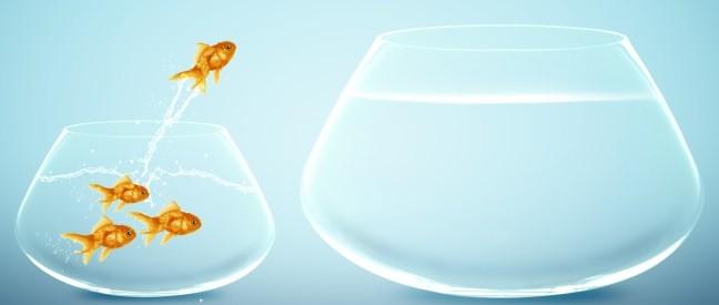 Goldfisch springt aus seinem Glas